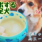 【コーギー 食レポ】鳥のスープ