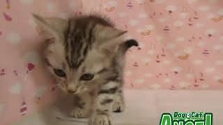 1907041 【ペットショップ エンゼル】お薦めの子犬・子猫