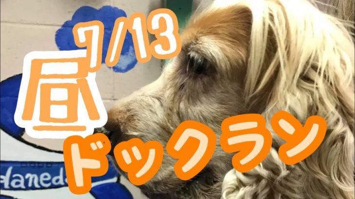 7/ 13お昼のドックラン♪羽田空港近くのペットホテルエアライン羽田にご宿泊中のお昼のドックランのご様子です。
