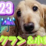 7/23朝♪ペットホテルエアライン羽田にご宿泊中のペットちゃん達のご様子です。