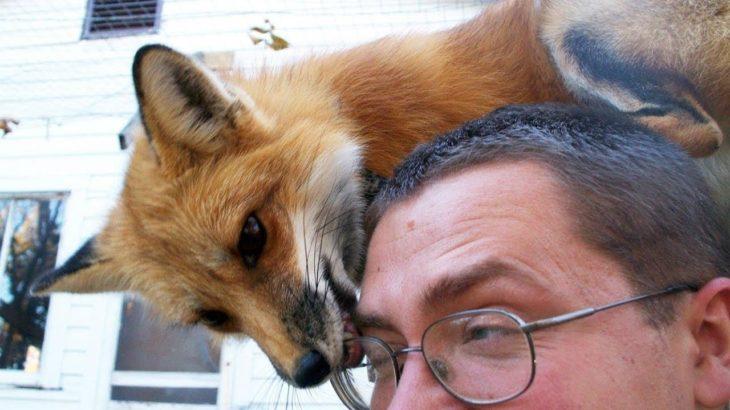 FOX  – かわいいFOXとFUNNY FOXのビデオ編集   ペットビデオ