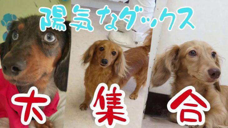 トリミング室だーい好き![兵庫ペット医療センター トリミング 尼崎 犬動画 ]Happy dog glooming