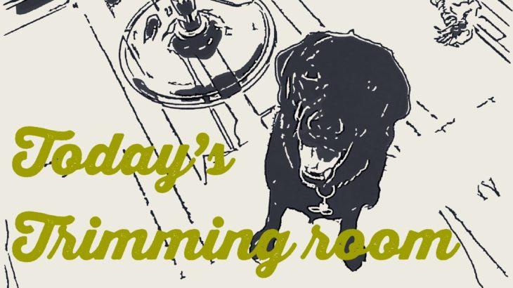 【ラブラドールレトリーバー】アニメで描くトリミング室[兵庫ペット医療センター トリミング 尼崎 犬動画 ]Happy dog glooming