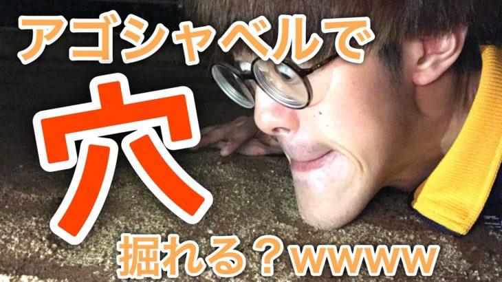 【衝撃映像】アゴシャベルで地面に穴掘ってたらまさかの出会いがwwww【城之内】