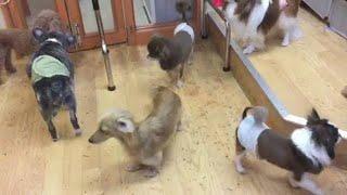 中央区日本橋ペットサロン・【犬と日本橋】