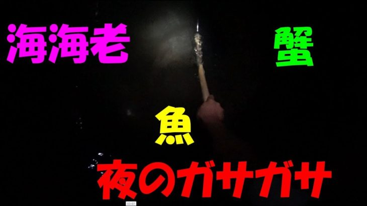 【衝撃映像】チヌ(黒鯛)網で掬える魚?海海老、渡り蟹?イシガニ?