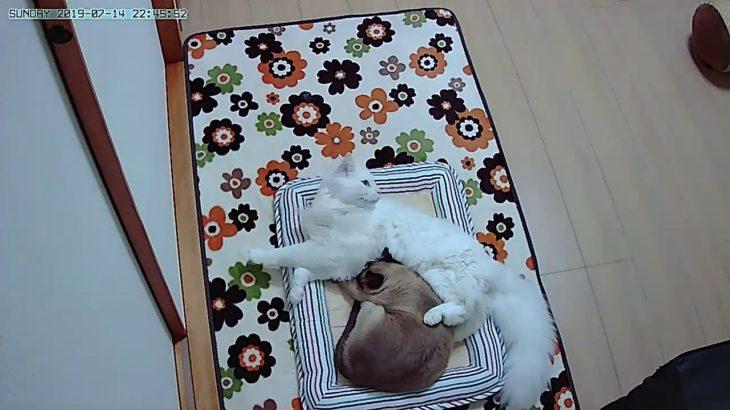 ペットカメラから見た猫部屋