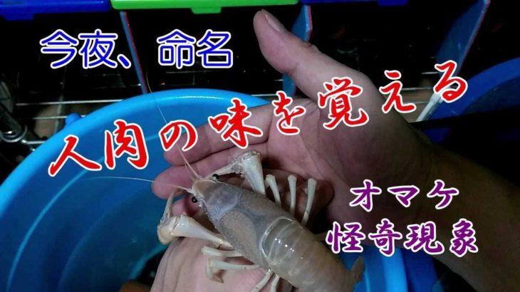 【観覧注意】ペットが飼い主を喰らう衝撃映像~遂に命名!~奇怪な現象、皮膚に浮かび上がる文字