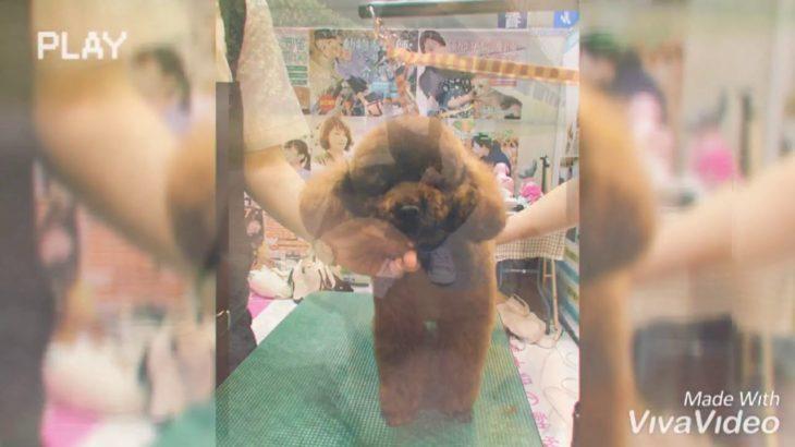 【ペット美容学科 夏フェス カットデモ 終わってちょっと休憩】動物専門学校 トリマー 動物看護師 アクアリウム 動物のお仕事
