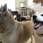 ペットホテル x 犬のしつけ 2019.07.15