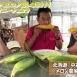 甘いトウモロコシ『サニーショコラ』食レポ2019。まさにこれがスイートコーンだ。:北海道 富良野 メロン農家の寺坂農園