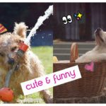 Cute and Funny | puppies  | Lovely Pet Videos  Compilation   | かわいいペットが癒す| 可愛萌萌動物 | 寵物影片#9