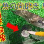 【衝撃映像】泳いでいる魚の歯磨きをやってみた!