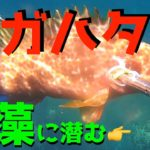 衝撃映像!日本海の無人島で高級魚デカキジハタが捕食していた生き物とは【17話】