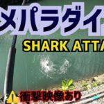 [衝撃映像]GTポイントにきたらサメパラダイスだった[沖縄][サメ][釣り]