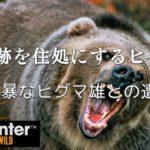 ゲーム実況 面白い「二頭の樋熊の生態にせまる?」[theHunter: Call of the Wild][steam] #2