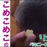 【グルメ犬が食レポ?コメントも!】米粉のお店『こめこめこ』の犬猫おやつのご紹介
