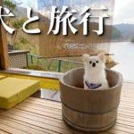 わんこと初温泉旅行!ペットと泊れる旅館に行ってみた♫Vlog