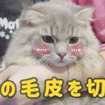 ペットスパでかわいい猫のヘアカット