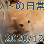 ペットの日常 20201220