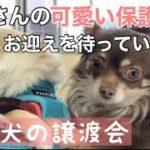 ペットショップで買う前に譲渡会へ★可愛い保護犬たちが家族のお迎えを待ってます!