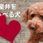 しゃべる犬 名古屋弁【おしゃべりペット】やめられん 盗み食い